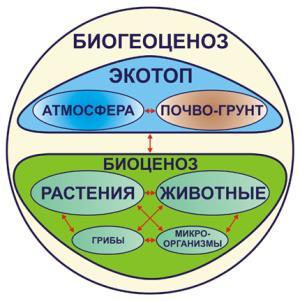 Компоненты биогеоценоза