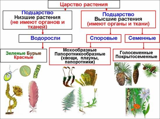 Царство растения